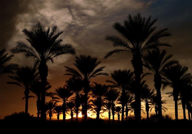arizona holiday christmas - silhouette of trees