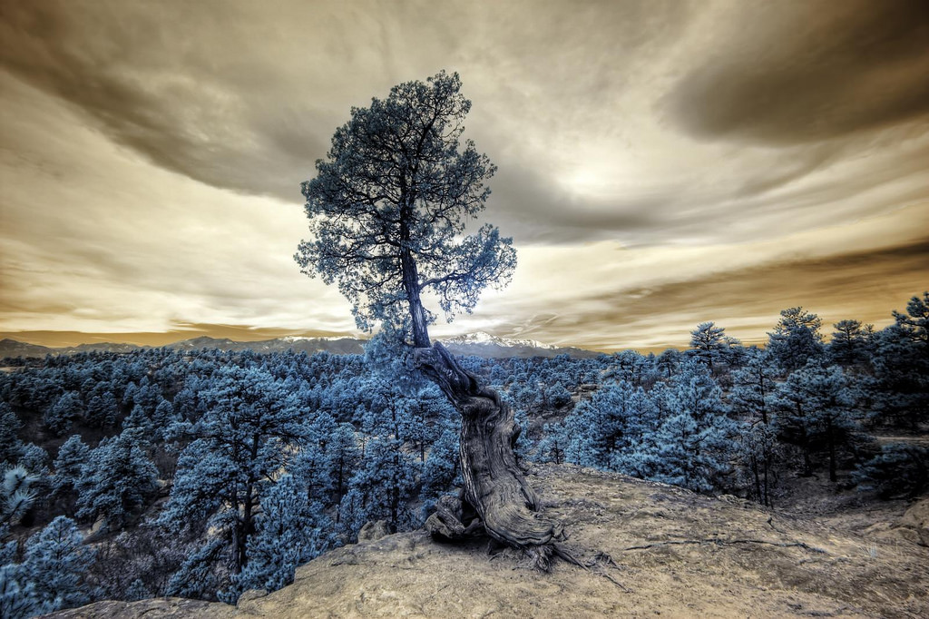 stylised photo of a tree on a ledge, overlooking other trees
