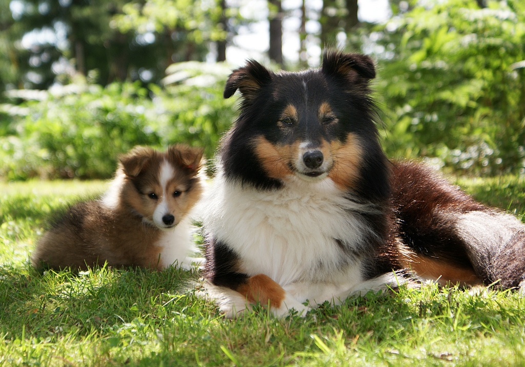 Estate Planning - dog and puppy sitting on grass