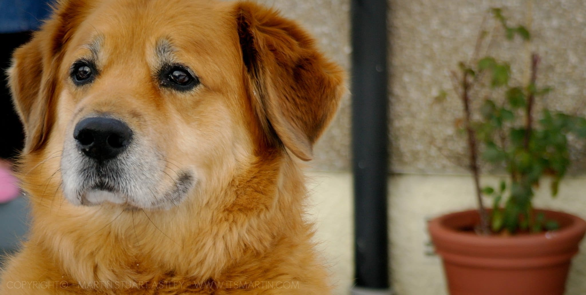 Estate Planning - puppy with blurred background