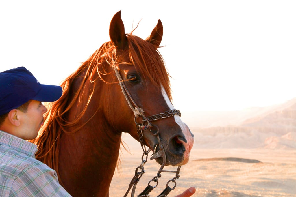 planning your estate - person holding horse