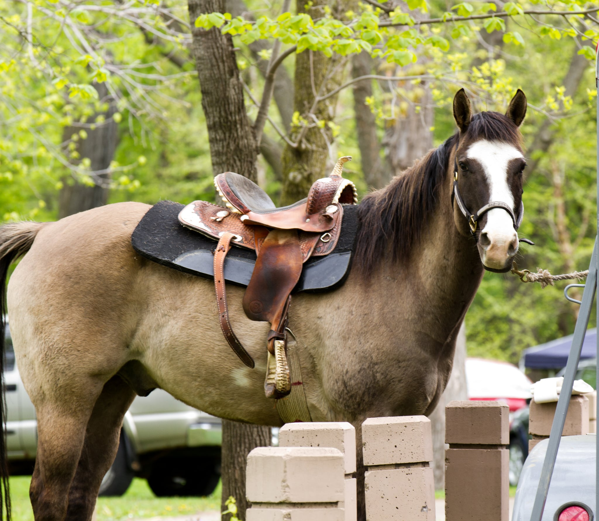 planning your estate - horse tied outdoors
